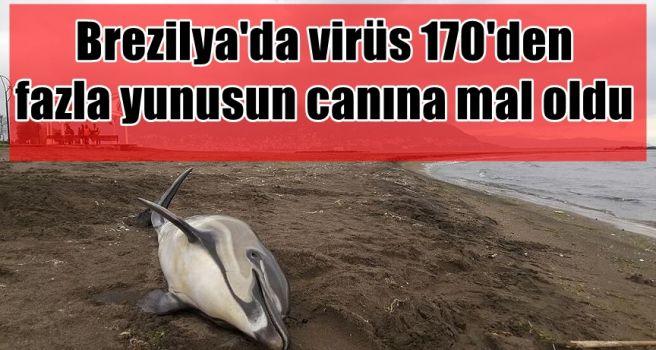 Brezilya'da virüs 170'den fazla yunusun canına mal oldu