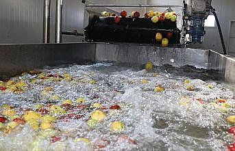 Erzincan'dan 3 kıtaya meyve suyu ihracatı