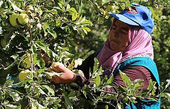 Fransa ve İspanya'daki bebeklerin meyve püresi Erzincan'dan