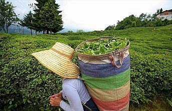 Türk çayı 1,6 milyon dolar kazandırdı