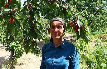 Şarköy'ün iri kirazının bahçeden sofraya lezzet yolculuğu