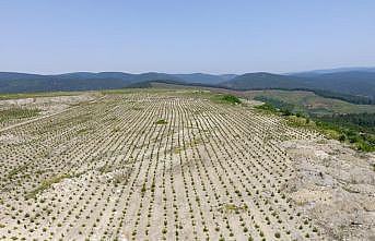 Bursa'da eski maden sahası yeniden yeşile büründü