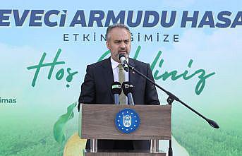 Bursa'da deveci armudu hasadı başladı