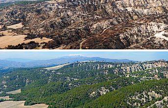 Geçen yıl yanan orman alanlarının yarısından fazlası ağaçlandırıldı