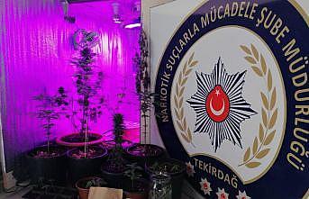 Tekirdağ'da yasa dışı kenevir yetiştiriciliğine yönelik operasyonda 5 gözaltı