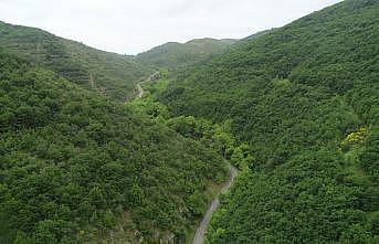 Ganos Dağı eteklerindeki ormanlar ziyaretçilerine görsel şölen sunuyor