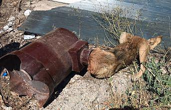 Sakarya'da kafası sobaya sıkışan köpeği itfaiye ekipleri kurtardı