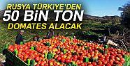 Türk domatesi açıklaması
