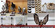 Türkiye'nin biyolojik çeşitliliği bu...