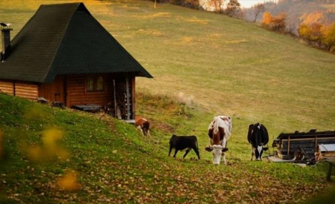 Bosna Hersek'te sonbahar renkleri