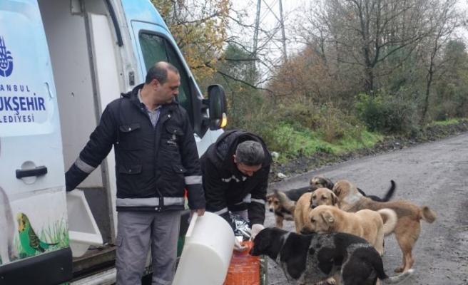 Sokakta yaşayan hayvanlara günlük 1 ton mama