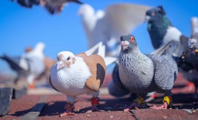 Çay ocağını kuşlar için yuvaya dönüştürdü