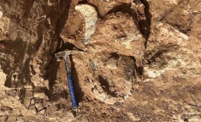 'Dünyanın en büyük papağanının' kalıntıları bulundu
