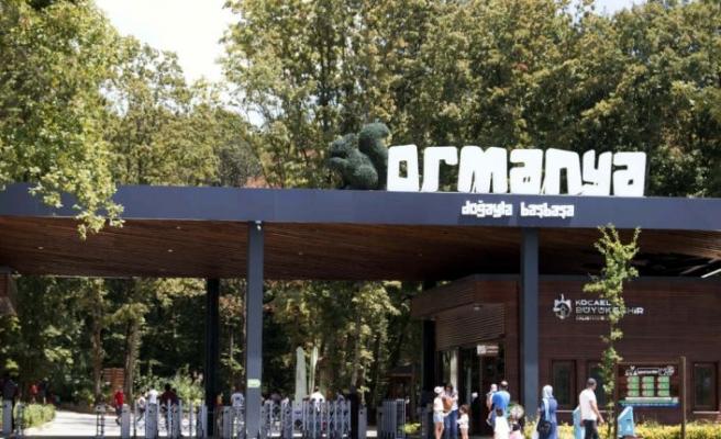 Ormanya'da yılın ilk 9 ayında 579 yaban hayvanı tedavi edildi