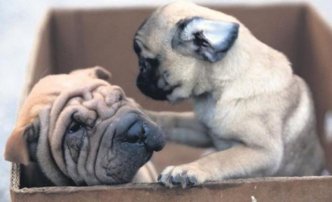 Edirne'de bir araçta 7 köpek yavrusu bulundu