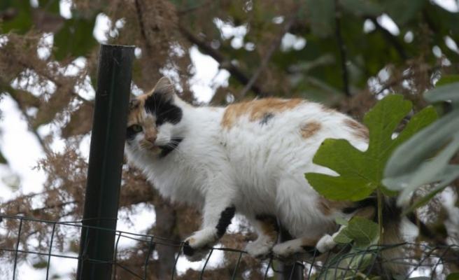 Vefat eden annesinden kalan sokak kedilerine sahip çıktı