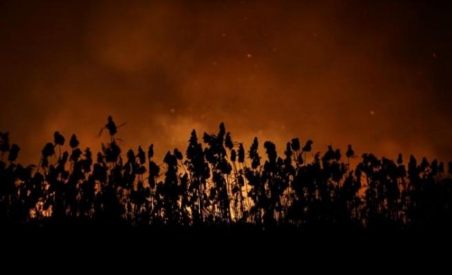 Bursa'da sazlık yangını