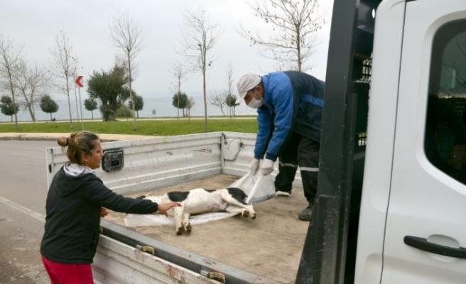 Kocaeli'de 3 sokak köpeğinin ölü bulunmasına inceleme