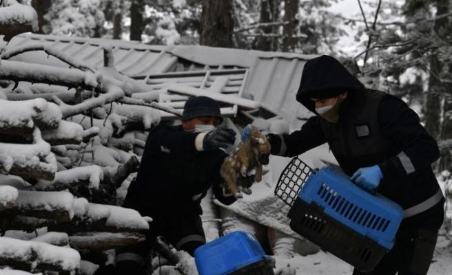Uludağ'da donmak üzereyken bulunan köpek yavrularını belediye ekipleri kurtardı