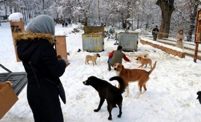 Yalova'da yabani hayvanlar için doğaya tonlarca yem bırakıldı