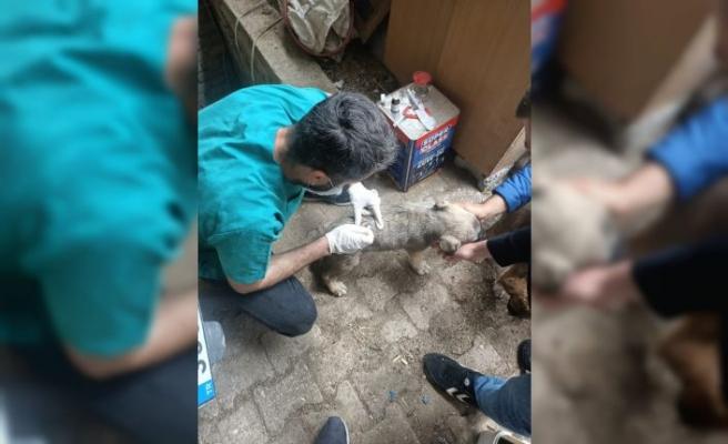Edirne'de bir köpeğin sokakta tüfekle öldürülmesine hayvanseverler tepki gösterdi