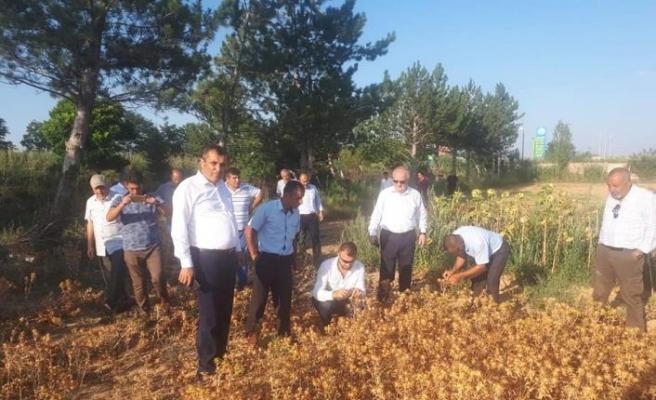 Kocaeli'de aspir yağ tesisi kurulacak