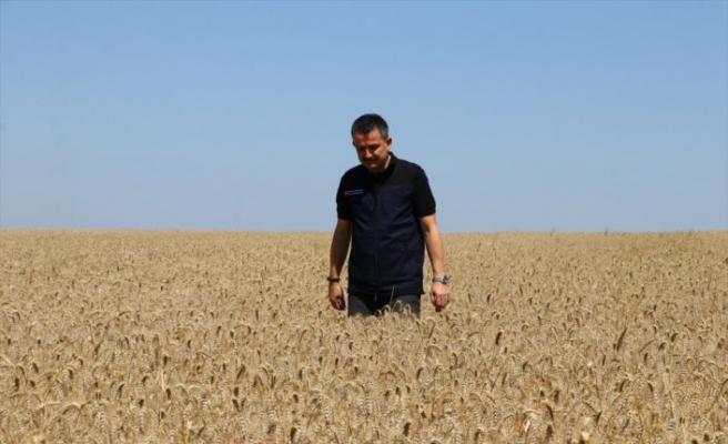 """Tarım ve Orman Bakanı Pakdemirli: """"Kanola tohumunun yüzde 50'sini biz karşılayacağız"""""""