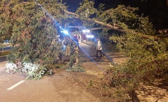 Üsküdar'da yola ağaç devrildi