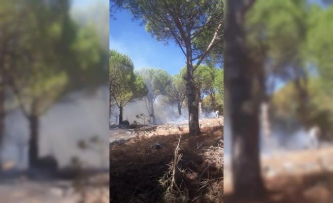 Balıkesir'de çamlık alanda çıkan yangın kontrol altına alındı