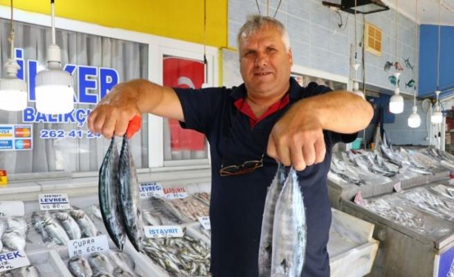 Marmara'dan çıkan bol palamut balıkçıyı sevindirdi
