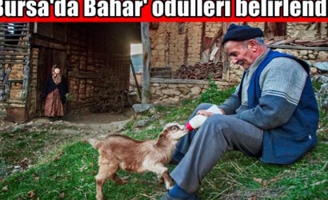 'Bursa'da Bahar' ödülleri belirlendi