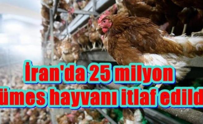 İran'da 25 milyon kümes hayvanı itlaf edildi
