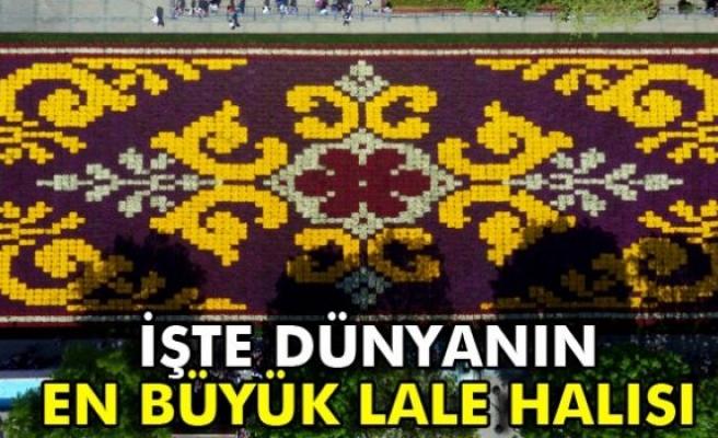 İşte dünyanın en büyük lale halısı