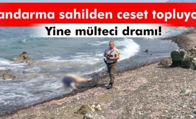 Jandarma Datça sahilinde ceset topluyor