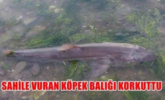 Sahile vuran köpek balığı korkuttu