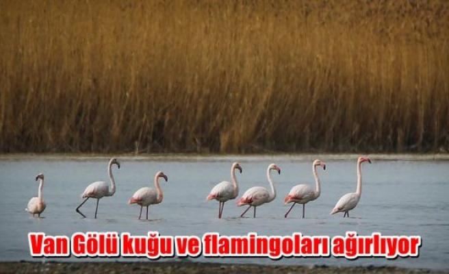 Van Gölü kuğu ve flamingoları ağırlıyor