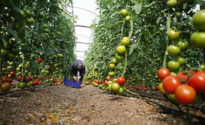 Yaş meyve sebze ihracatı yüzde 13 arttı