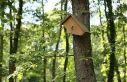 Ormanya'nın kuşları