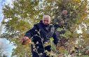 Edirne'de 160 yıllık ağaçtan toplanan bal...