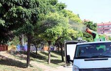 """Edirne'de popülasyonu artan """"dantel böceği""""ne karşı ilaçlama çalışması başlatıldı"""