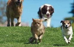 Köpeğinden kaçan kedinin ölümüne yol açan kişiye...