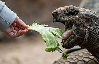 Dev kaplumbağaların yuvası: Changuu Adası