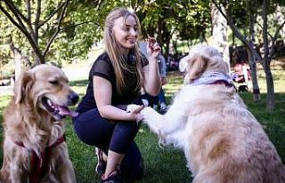 Evcil hayvanlar 'PetSurfer' ile güvenli ellerde