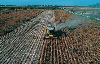 Soya, verimi ve fiyatıyla çiftçiyi sevindirdi