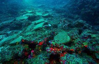 Antalya'da 3 bin 600 yıllık gemi batığı bulundu