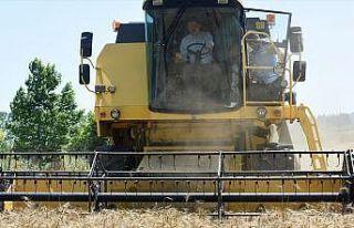 Bakan Pakdemirli Büyükçekmece'de buğday hasadı...
