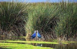 UNESCO için kuş cennetinin biyoçeşitliliği ortaya...