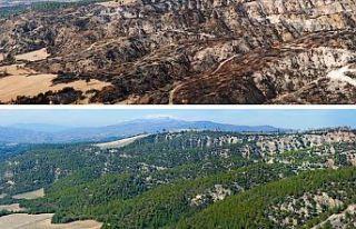 Geçen yıl yanan orman alanlarının yarısından...