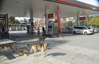 Akaryakıt istasyonunda 2 köpeğin ezilmesiyle ilgili...