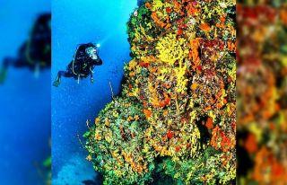 Ayvalık'ın deniz çayırlarının korunması...